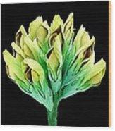 Suckling Clover (trifolium Dubium), Sem Wood Print