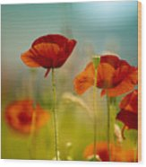Summer Poppy Wood Print