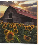 Sunflower Farm Wood Print