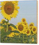 Sunflower Series Wood Print