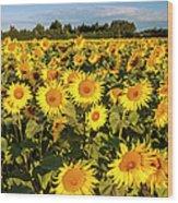 Sunflowers At Dawn Wood Print