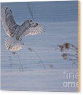 Sunlit Wings Wood Print