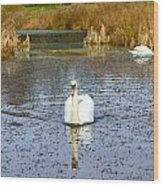 Swan In River In An  English Countryside Scene On A Cold Winter  Wood Print