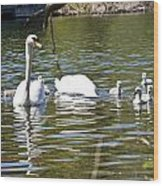 Swan With Signets Wood Print