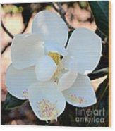 Sweet Magnolia Wood Print