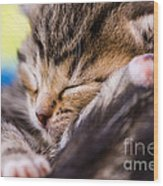 Sweet Small Kitten  Wood Print