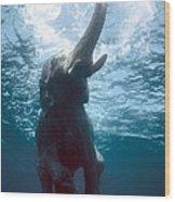 Swimming Elephant Wood Print