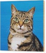 Tabby Cat Wood Print
