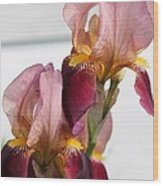 Tall Bearded Iris Named Indian Chief Wood Print