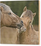 Tender Moment Wood Print