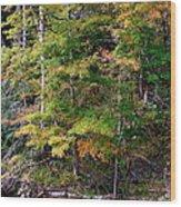 Tennessee Autumn Stream Wood Print