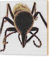 Termite Soldier Wood Print
