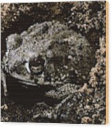 Texas Toad Wood Print