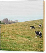 The Cows Of Dunnottar Castle Wood Print