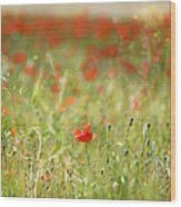 The First Poppy Of The Field Wood Print