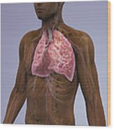 The Lungs And Cardiovascular System Wood Print
