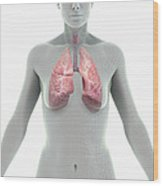 The Lungs Female Wood Print