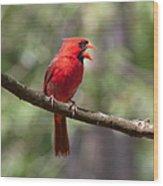 The Singing Cardinal Wood Print