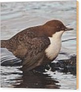 The White-throated Dipper Wood Print
