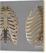 Thoracic Cage Wood Print