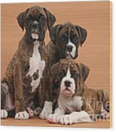 Three Boxer Puppies Wood Print