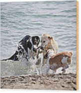 Three Dogs Playing On Beach Wood Print