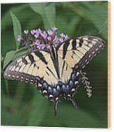 Tiger Swallowtail On Butterfly Bush Wood Print