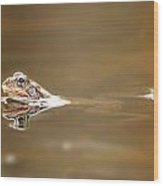 Toads Wood Print