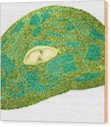 Tomato Chloroplast, Tem Wood Print