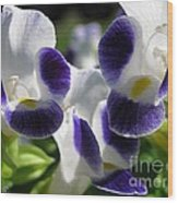Torenia From The Duchess Mix Wood Print by J McCombie