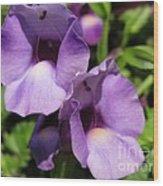 Torenia Named Purple Moon Wood Print