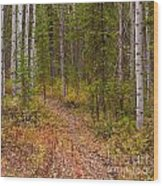 Trail In Golden Aspen Forest Wood Print