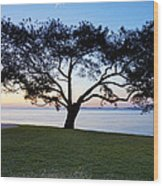 Tree By The Bay Wood Print