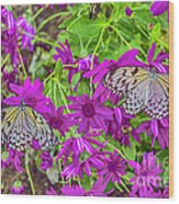 2 Tree Nymph Butterflies Wood Print