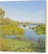 Trees And Reeds Close To The River Wood Print