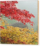 Trees In A Garden, Butchart Gardens Wood Print