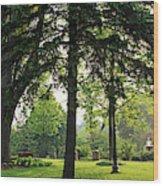 Trees In A Park, Adams Park, Wheaton Wood Print