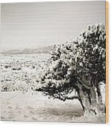 Trees In Snow Wood Print
