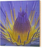 Tropic Water Lily 16 Wood Print