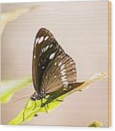 Tropical Butterfly Wood Print