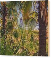 Tropical Forest Palm Trees In Sunlight Wood Print