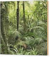 Tropical Jungle Wood Print by Les Cunliffe