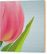 Tulip I Wood Print