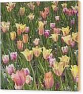 Tulips At Dallas Arboretum V92 Wood Print