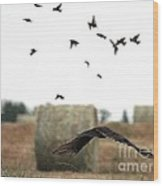 Turkey Vulture Takes Flight Wood Print