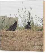Turkey Vultures Wood Print