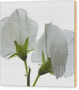 Two White Sweet Peas 2 Wood Print