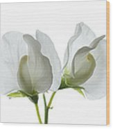 Two White Sweet Peas Wood Print