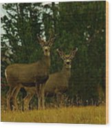 Two Young Bucks Wood Print