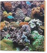 Underwater View Wood Print